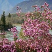 Весна идёт !!! - Алтай Фото, автор: Джазатор