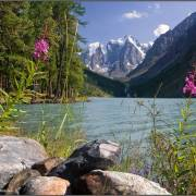 Ещё раз цветущее Шавло - Алтай Фото, автор: Аня