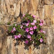 Весна - Алтай Фото, автор: altaika