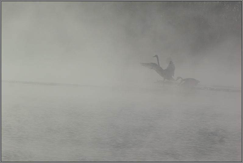 Алтай Лебеди